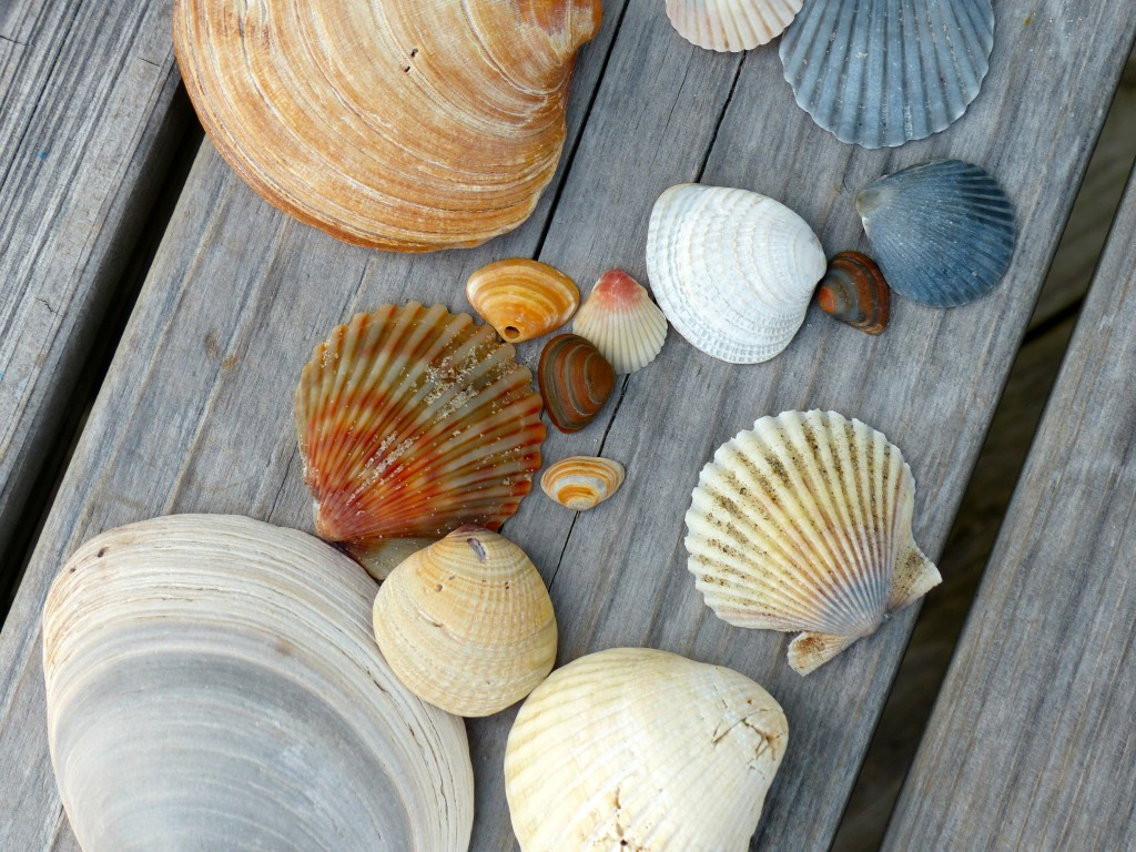 shells gathered for painting