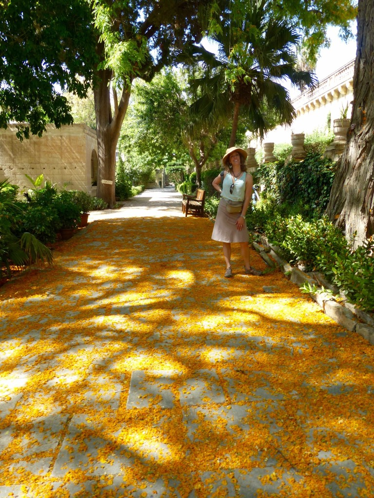 A beautiful path of colorful flower petals inspire me!